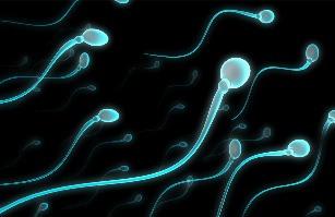 makanan penyubur sperma , cara agar cepat hamil