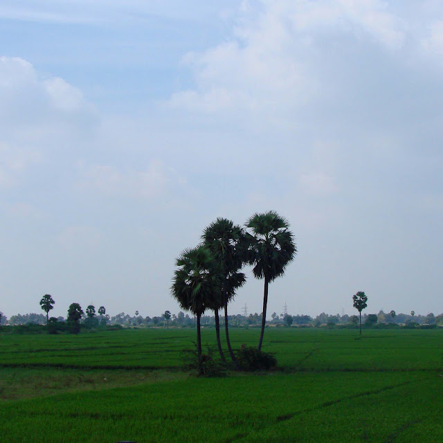 paddy fields agriculture anantapur india