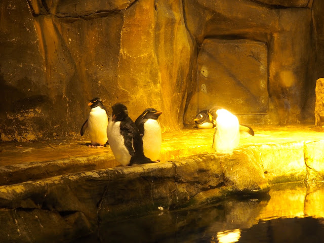 Penguins in Polar Adventure, Ocean Park