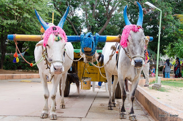 decorated bullocks for festival