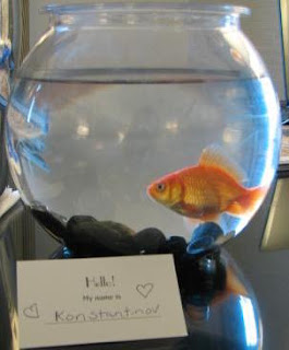 Guppy Love: Kimpton Hotel