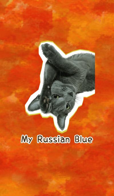 My Russian Blue