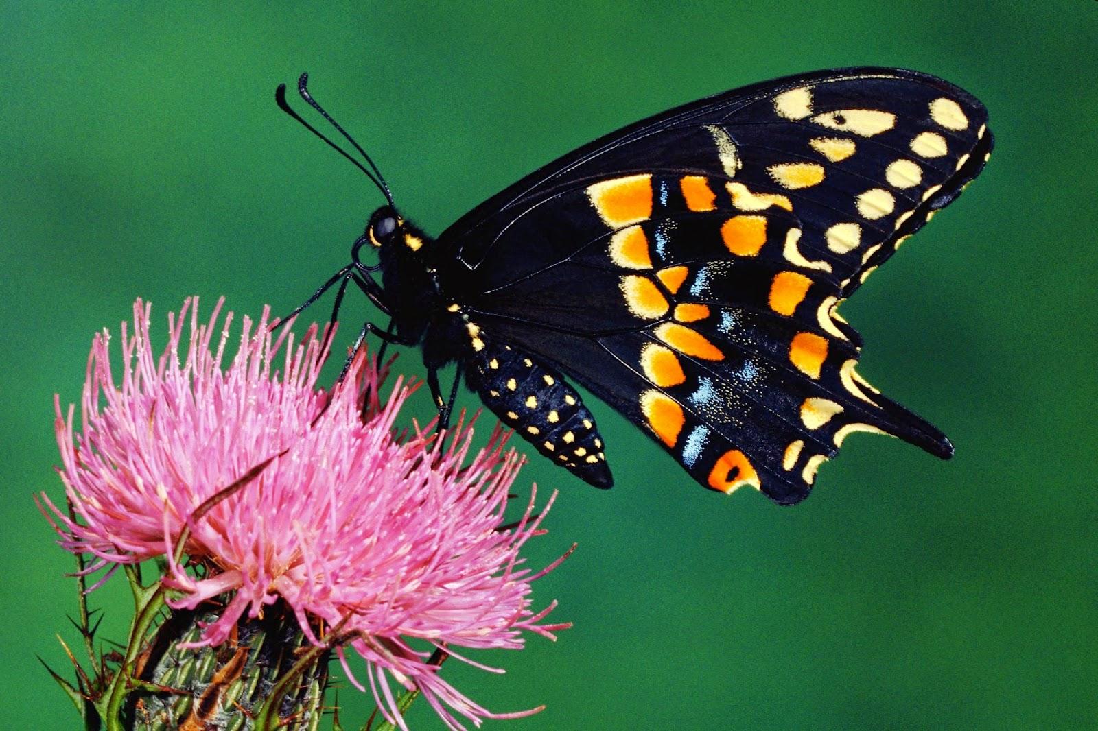 Imagenes De Mariposas De Colores: Banco De Imagenes Y Fotos Gratis: Imagenes De Mariposas