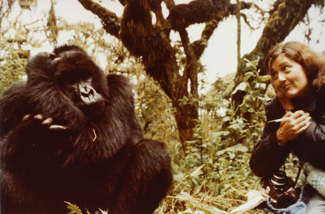 - Dian Fossey and a gorilla she named Digit May 1977