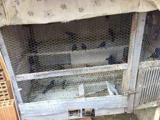 Operação de combate ao tráfico de animais