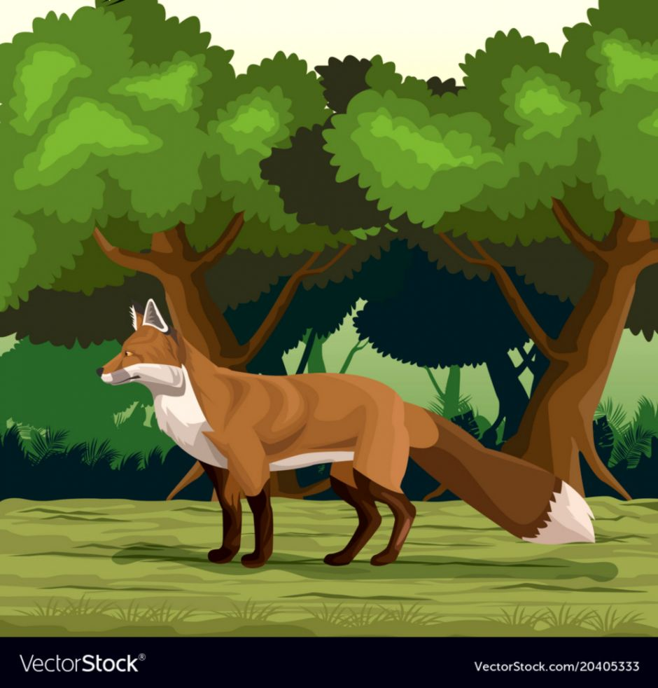 Fox In Jungle Wallpapers Memes