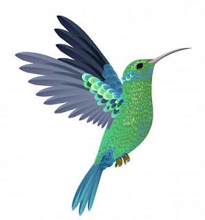 Suara burung kolibri mp3
