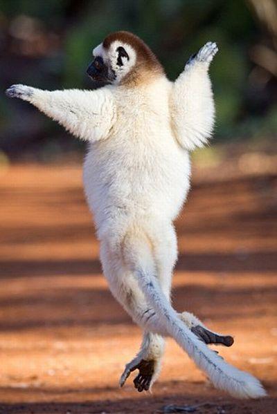 Animals dancing-animal...