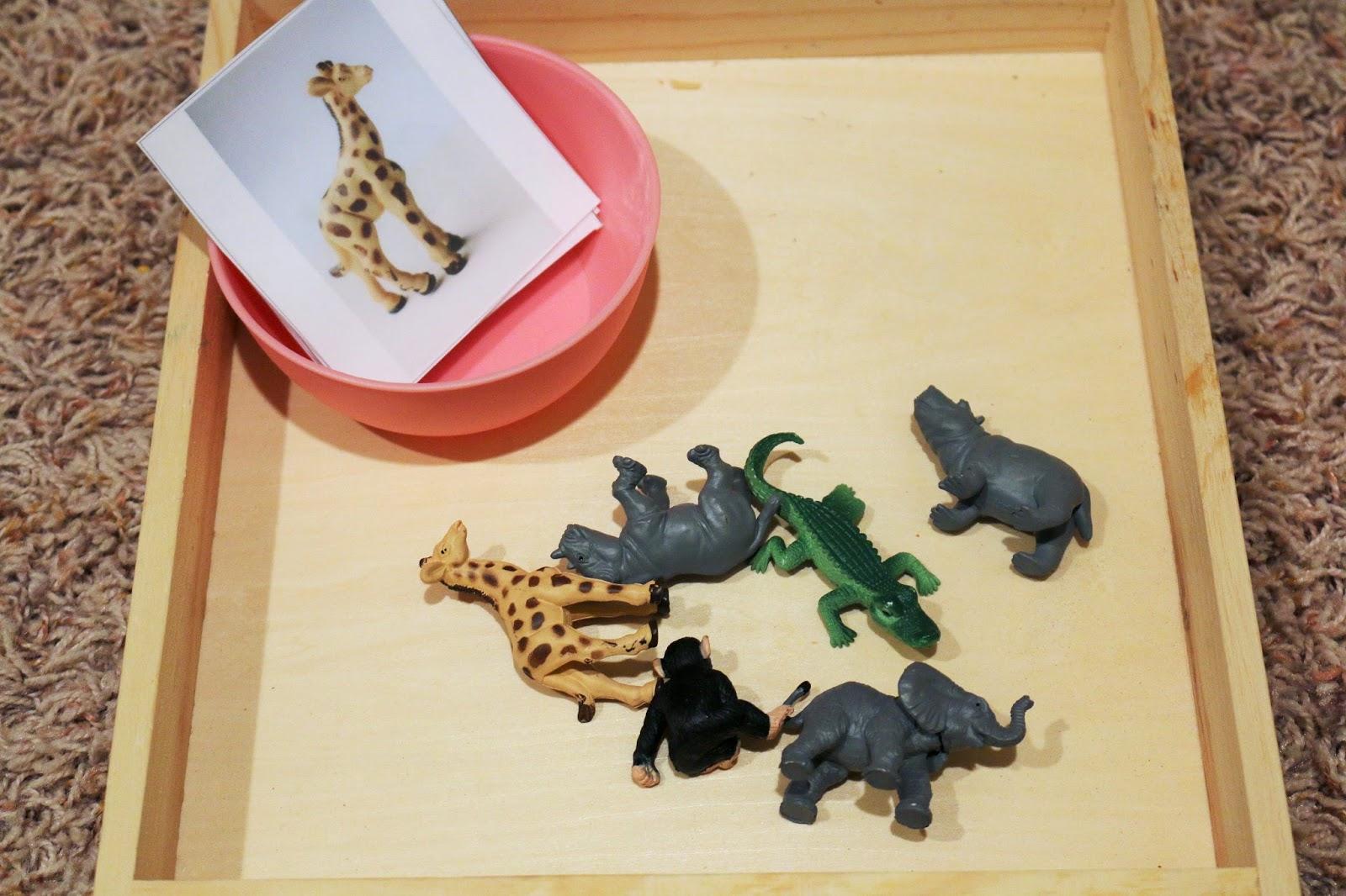 Letter Z Toddler Activities