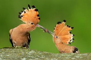 Zainspiruj się naturą. Tydzień trzeci.Ptaki