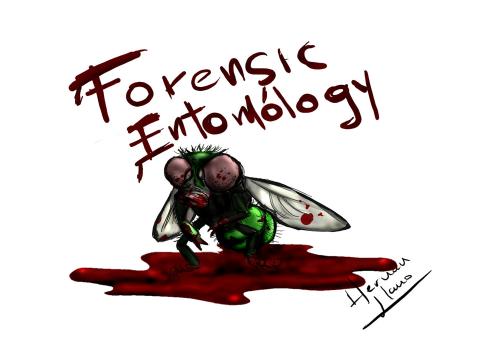 Ccjs Undergrad Blog Forensic Week Forensic Entomology