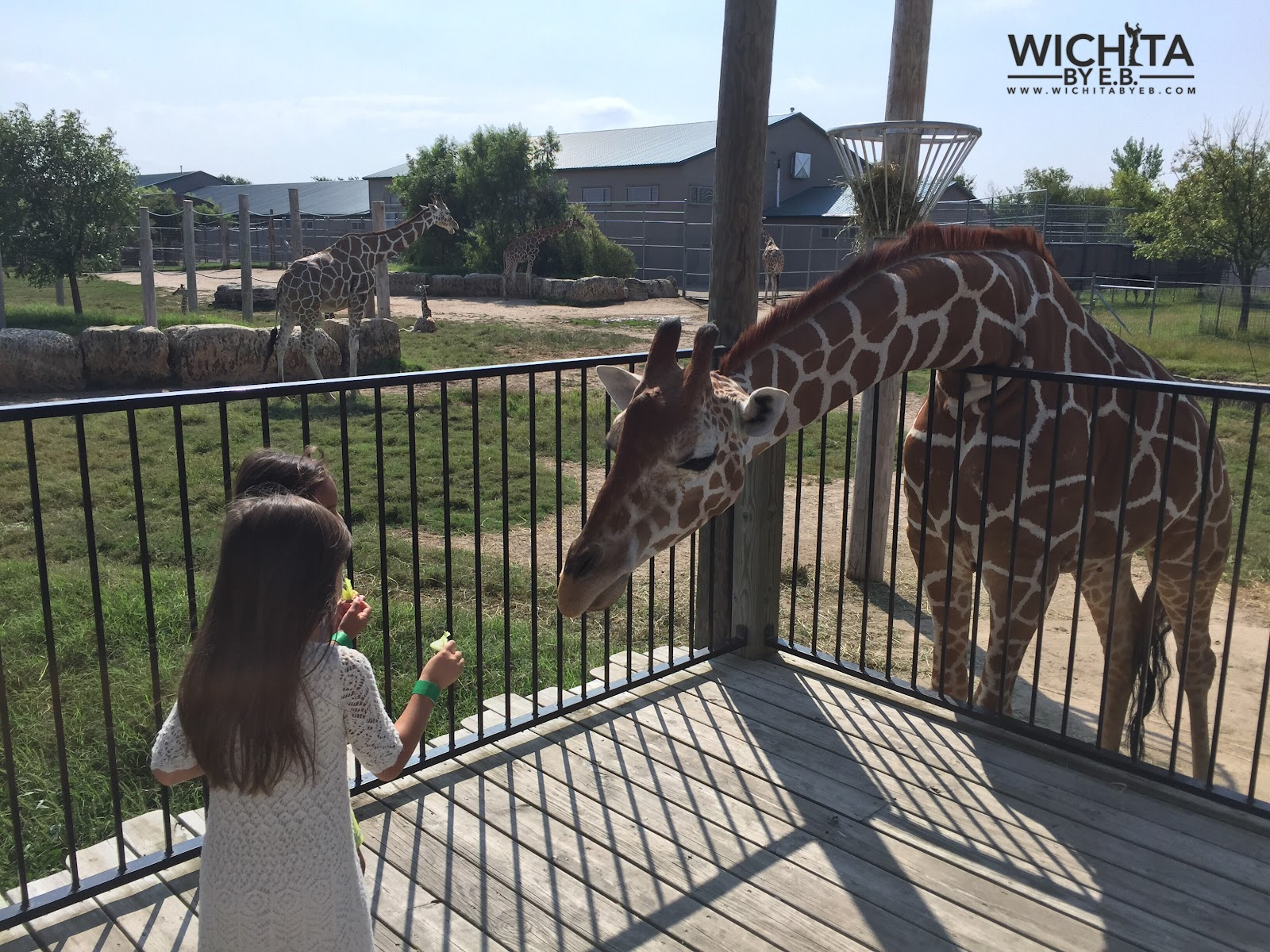 Tanganyika Wildlife Park – Wichita By E B