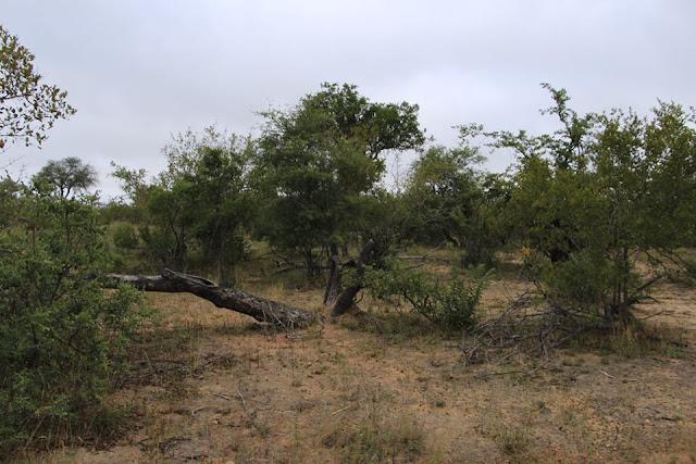 Parque Kruger, Sudáfrica