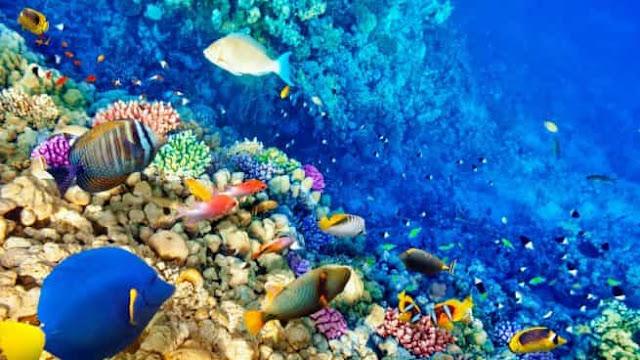 cancun-arrecife