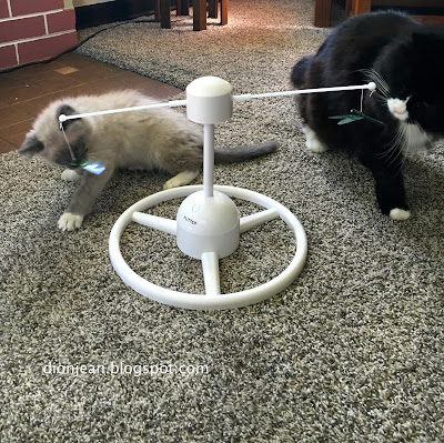 Two cats playing with one toy