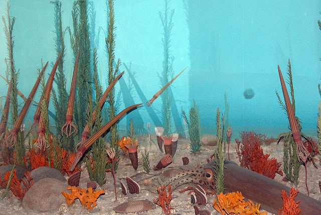 Diorama da fauna e flora do período Ordoviciano