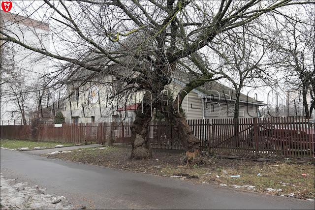 Минск. Переплетенные деревья
