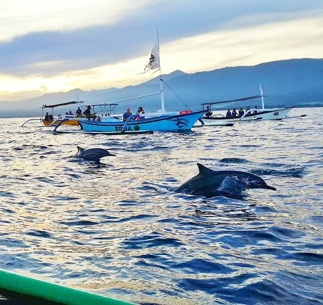 foto lumba lumba di pantai lovina