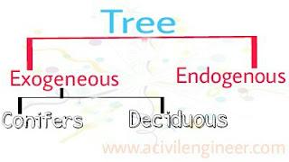 Exogeneous, Endogenous, conifers, deciduous