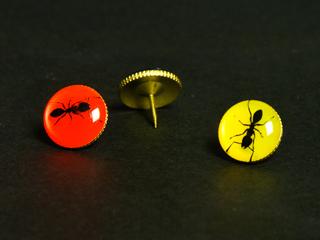 カラー画鋲(ピン)に蟻を印刷した写真
