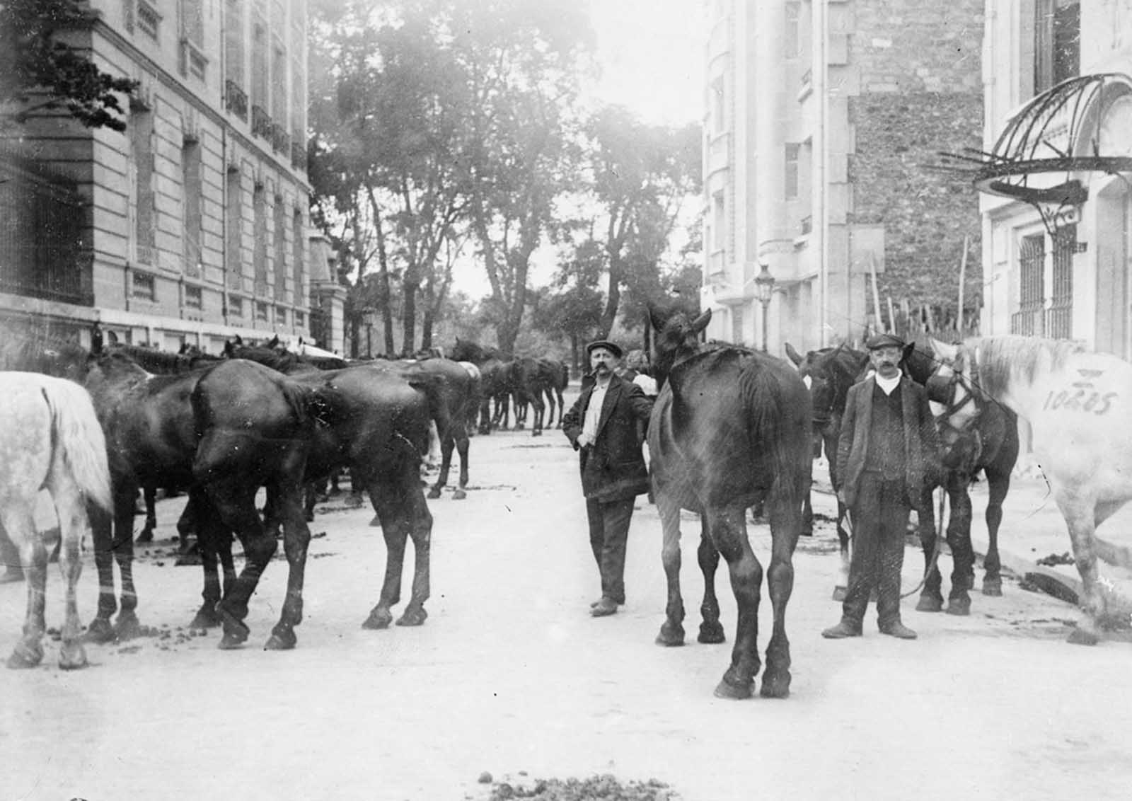 Horses requisitioned for the war effort in Paris, France, ca. 1915. Farmers and families on the home front endured great hardship when their best horses were taken for use in the war.