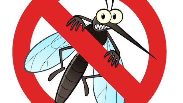 Cách dùng tinh dầu sả đuổi muỗi