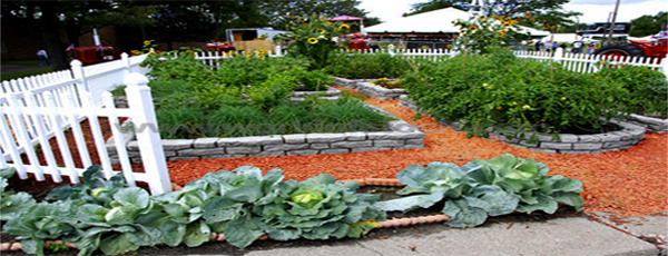Backyard and Family Garden Layout Idea - How To Make A Vegetable Garden? -Vegetable Garden Plan And Layout