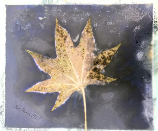 Wet cyanotype_Sue Reno_Image 214