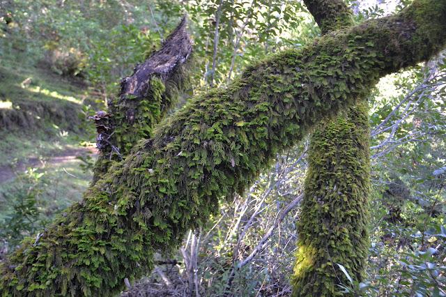 thick moss fur