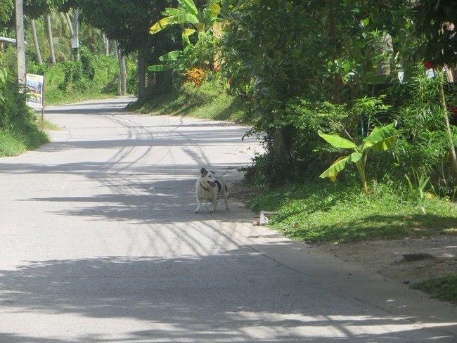 Собака выбежала на дорогу