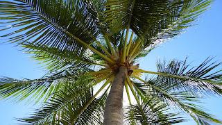 Zomer natuur achtergrond met een palmboom.