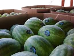 Cartons of water melons