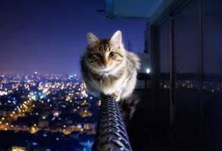 891454a2d170 Γάτες που έγιναν διάσημες !