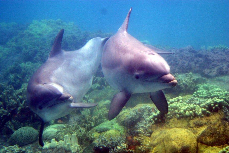 Dolphin Delfin Delfines Rosados