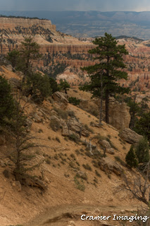 "Cramer Imaging's raw photo demonstrating the Sleeklens.com ""Through the Woods"" Lightroom preset workflow on a Bryce Canyon picture"