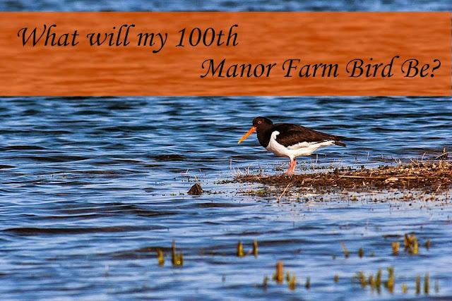 What will my 100th Manor Farm bird be?