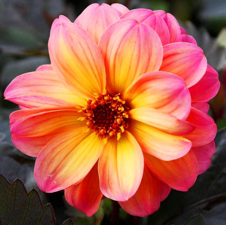 Fotos De Flores Para Pintar Al Oleo
