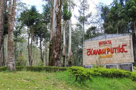 Wisata Kawah Putih Gunung Patuha Ciwedey Bandung