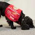 Η ΕΠΙΣΤΗΜΗ ΠΙΣΩ ΑΠΟ ΤΗΝ ΟΣΦΡΗΣΗ! Οι σκύλοι που ανιχνεύουν ασθένειες...