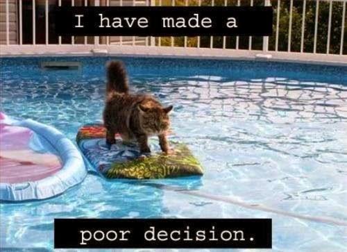 Cat on a surfboard