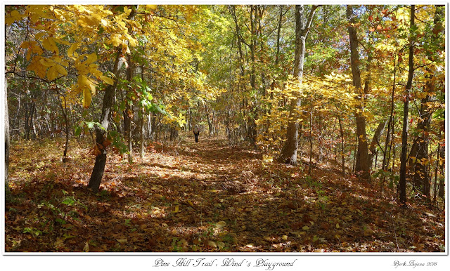 Pine Hill Trail: Wind's Playground