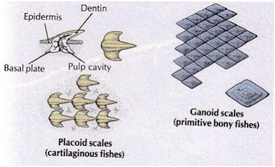 perbandingan tipe sisik