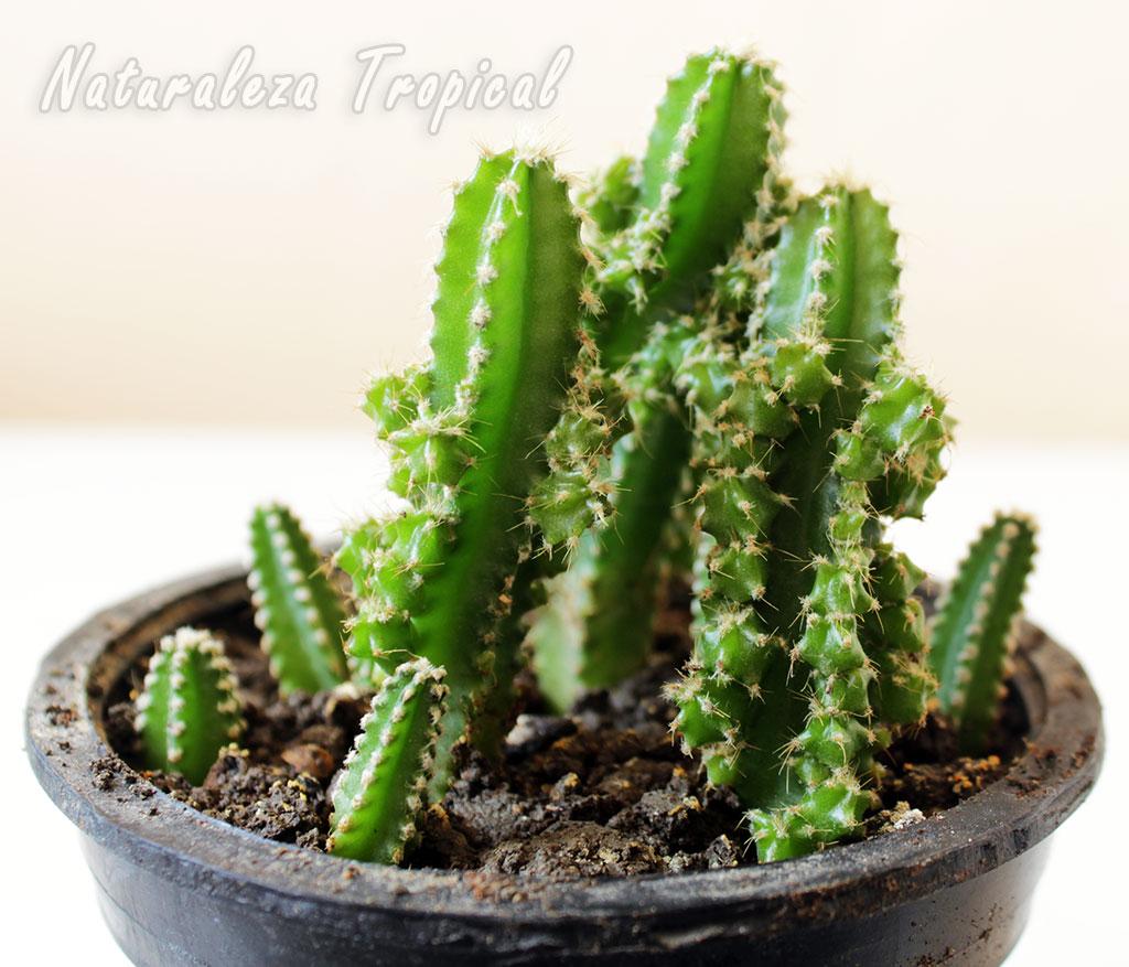 Naturaleza tropical el cactus castillo de hadas - Cactus en macetas pequenas ...