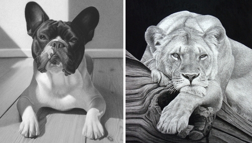00-Stephen-Ainsworth-Nine-Animal-Drawings-and-One-Painting-www-designstack-co