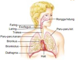 Fungsi Rongga Hidung pada Manusia