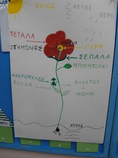 15ο ΝΗΠΙΑΓΩΓΕΙΟ ΚΟΡΥΔΑΛΛΟΥ: Ένα λουλούδι φέρνει την άνοιξη....