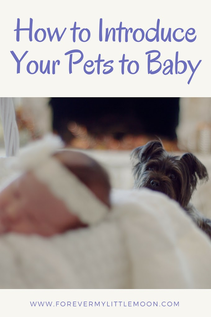 How to Introduce Your Pets to Baby