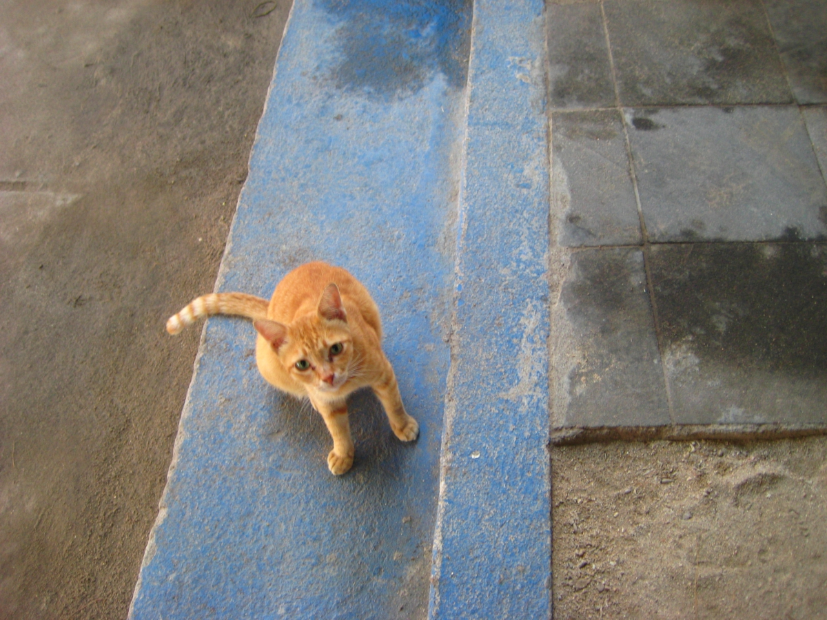 길리 고양이