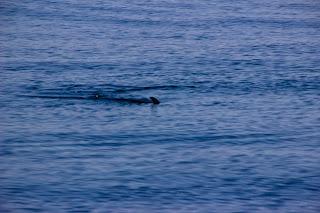 Aleta Tiburón Estrecho Gibraltar