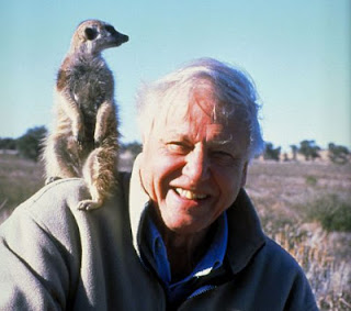 Meerkat David Attenborough's Life Stories Episode 2 Understanding the Natural World PBS Nature